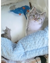 Kocyk Przedszkolaka Kot w Butach 110x130 cm - kolekcja 2016 r.